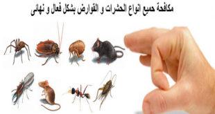 شركة مكافحة حشرات بالدمام