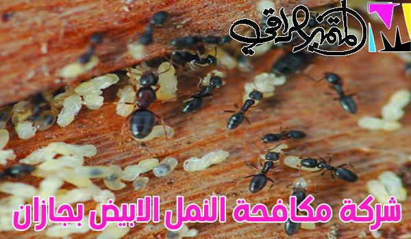 شركة مكافحة النمل الابيض بجازان 05038982553